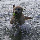 Montie at the beach by ben14