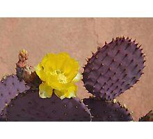 Purple Prickly Pear Cactus Photographic Print