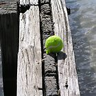 dog beach tennis ball by ben14