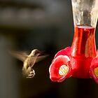 Hummingbird by Joe Hewitt