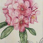 Pink Rhododendron by Denise Martin