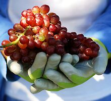 Grapes and the Gardener by Karin  Hildebrand Lau