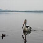pelican on lake by barnesy64