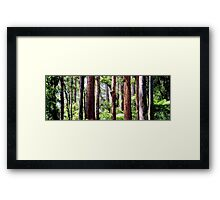 Coastal Rainforest Framed Print