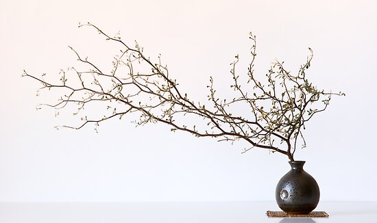 Vase With Branch by prbimages