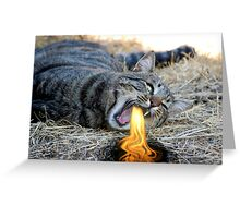 My Cat Breathes Fire! Greeting Card
