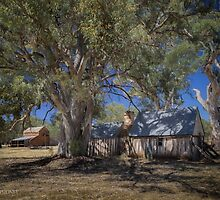Old Wilpena Station 2 by Jan Pudney