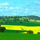 Canola Crop near Cowra NSW by pedroski