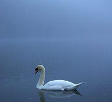 Swan on Loch Ness by Tez Watson