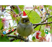 Where Is The Christmas Party? - Silver-eye! - NZ  Photographic Print