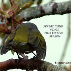 Spread your wings this festive season! - Silvereye Greeting card by AndreaEL