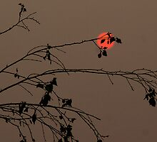 Bushfire Sunset by Rosina  Lamberti