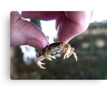 Crab Fingers! - Crab - NZ Canvas Print