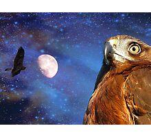 They Will Soar On Wings Like Eagles.. -  Harrier Hawk - NZ Photographic Print