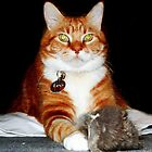 Cat and Mouse Portrait by Kristie Theobald