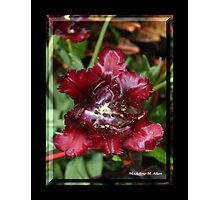 BLOOD RED Photographic Print