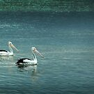 Peaceful Pelicans by Frank  McDonald
