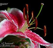 Stargazer by Jonicool