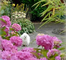 A Stroll in my Cottage Garden by Morag Bates