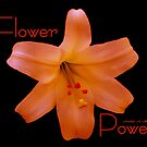Flower Power Lilly by Madeline M  Allen