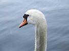 Swan - Parent by Matt Roberts