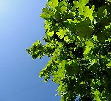 Lush Leafy Green by bewareofcourtz