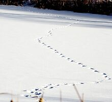 Animal Tracks by MarcVDS