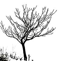 Solitary Tree - Black on White by Ryan Houston