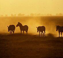 In the Amboseli Dust by bertspix