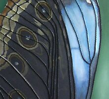 blue butterfly by cathy savels