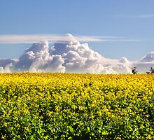 Canola Crops and Clouds by Eve Parry