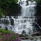 Chittenango Falls by Anne Smyth