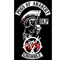 pugs of anarchy Photographic Print