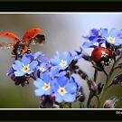 Ladybirds. by Ellen van Deelen