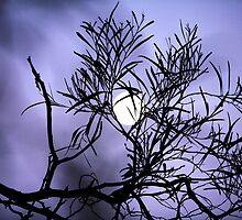 my moon by Rosina  Lamberti