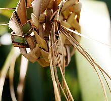 Woven Flax, New Zealand #2 by wendy Wood