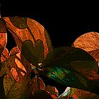 Sun Leaves by William Reed