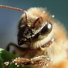 Honeybee Portrait by DWMMPhotography