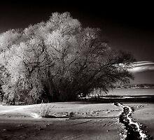 December Trail by Kerensa Fannon