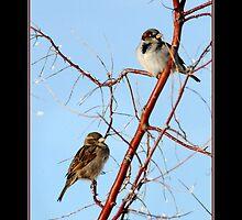 House Sparrow Pair by Ryan Houston