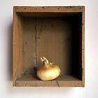 Onion by Ed Zabel