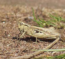 Grasshopper by Andy Owen