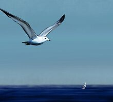 Sea Gull Flying over a Sailboat by GreenMountainT