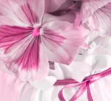 Pink Pansies In Ribboned Pot Sticker