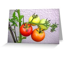 tomatoes growing in the sun Greeting Card