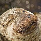Seal, Isle of Skye by Colin Bowdery