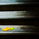 Autumn leaf on step by Sheila  Smart