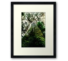 Old Growth Mountain Ash Framed Print