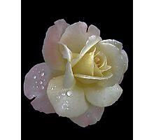 Porcelain rose Photographic Print