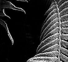 Frosty Ferns by toby snelgrove  IPA